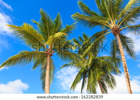 Three palm trees against a blue sky - stock photo