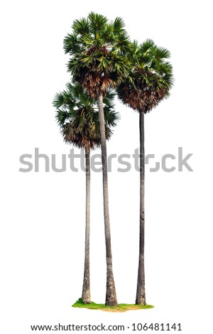 Three palm trees isolated on white background - stock photo