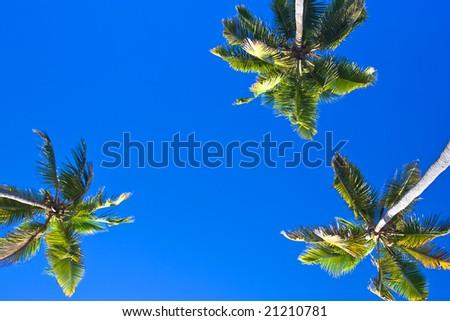 Three palms and blue sky - stock photo