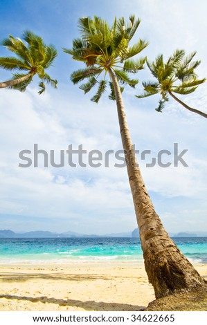 Three Palms over White Sand Beach