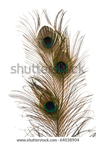 three peacock feather isolated on white background; - stock photo