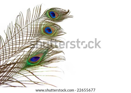 three peacock feathers isolated over white