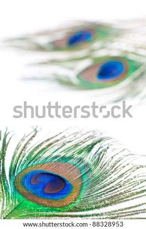 Three peacock feathers on white - stock photo