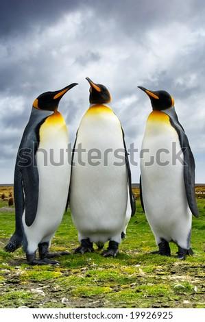 Three Penguins - stock photo