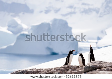 three penguins in an icy world - stock photo
