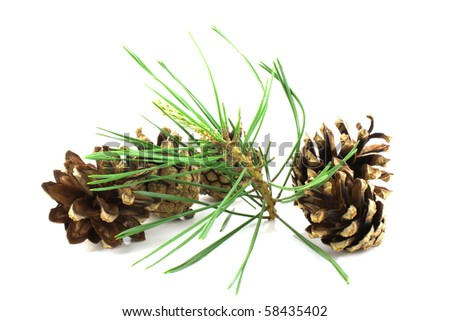 Three pine cones with twig over white for New Year card
