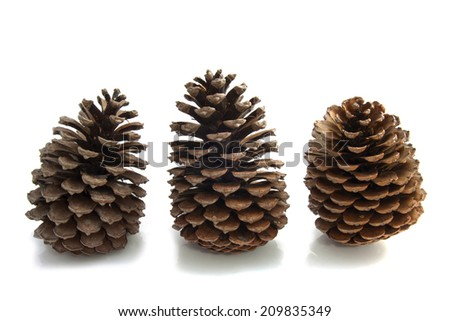 Three pines in a row isolated over white - stock photo