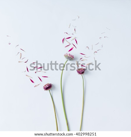 Three pink flowers with petals blown off on white background. Flat lay. - stock photo