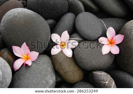 Three Pink frangipani,orchid and stones background