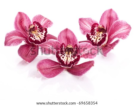 three pink orchid isolated on white background - stock photo