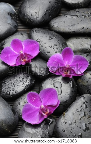 Three pink orchid with black pebble - stock photo