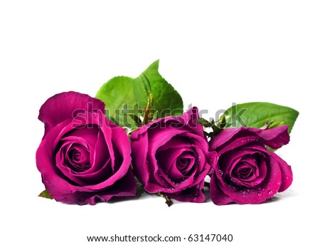 Three pink roses in a pure white background with space for text - stock photo