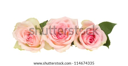 three pink roses  isolated on white background - stock photo
