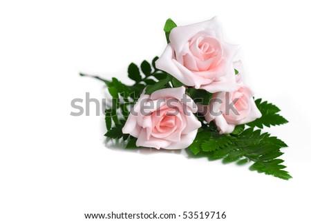 Three pink roses on white background - stock photo
