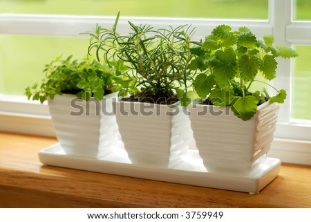 Three pots of herbs in a kitchen window: Marjoram, Rosemary, and Lemon Balm - stock photo
