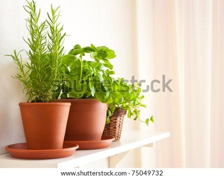 Three pots of herbs: Rosemary, Basil and Mint - stock photo