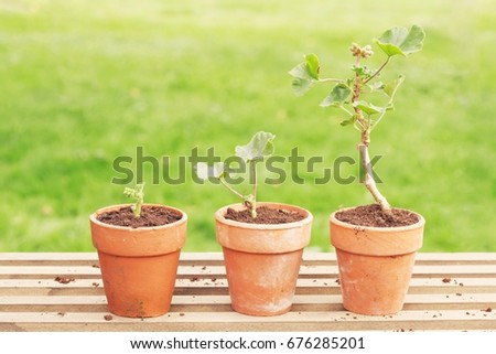 Three potted plants in a row against blurred grass