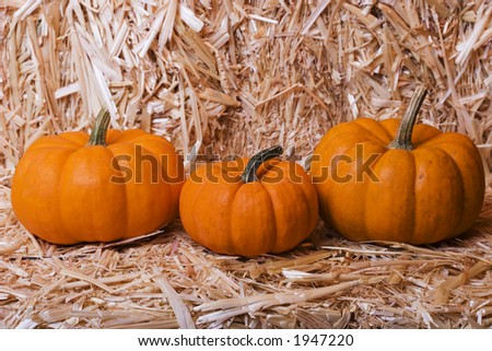 Three pumpkins on a bale of hay