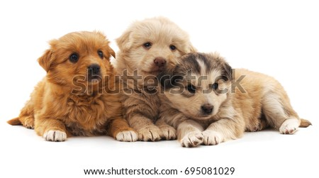 Three puppies isolated on a white background.