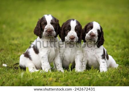 Three puppies on the grass - stock photo