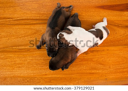 three puppies sleep together - stock photo