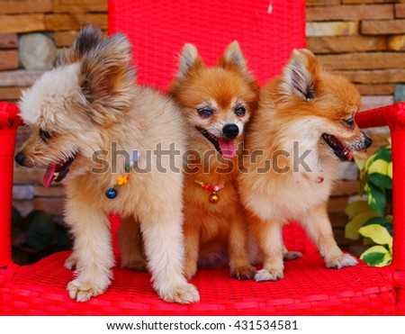 Three puppy dogs on a red chair