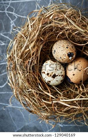 Three quail's eggs in a nest - stock photo