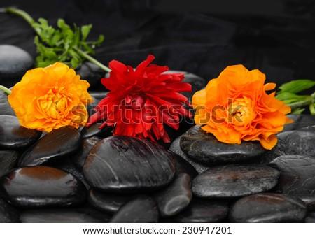 Three ranunculus flower with leaf on black stones  - stock photo