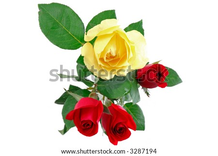 Three red and one yellow rose on withe background . - stock photo