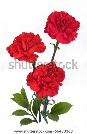 Three Red Carnation on White background - stock photo