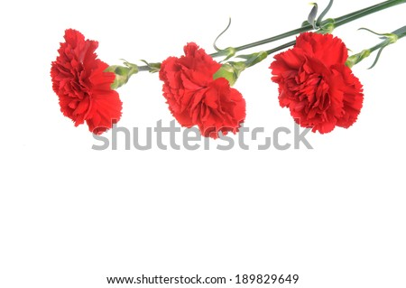 Three red cloves isolated on white