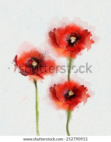 Three red Poppy flowers, watercolor illustration - stock photo