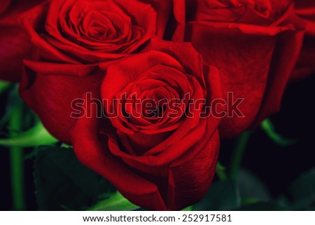 Three red roses - stock photo