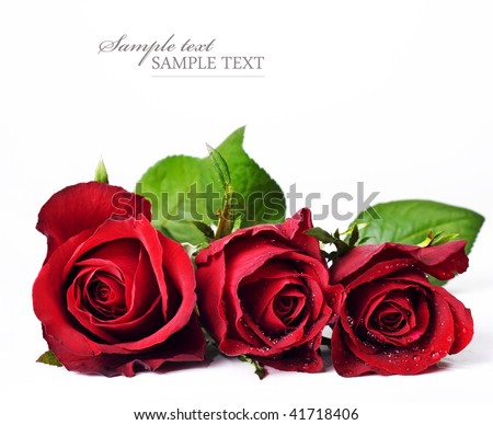 Three red roses against a white background with space for text - stock photo