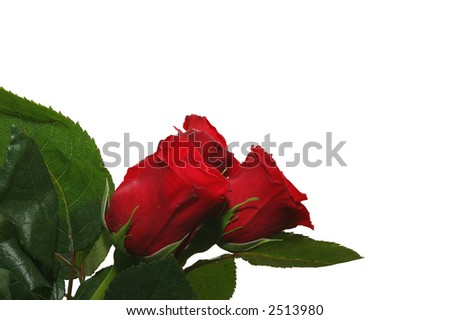 Three red roses (isolated on white) - stock photo