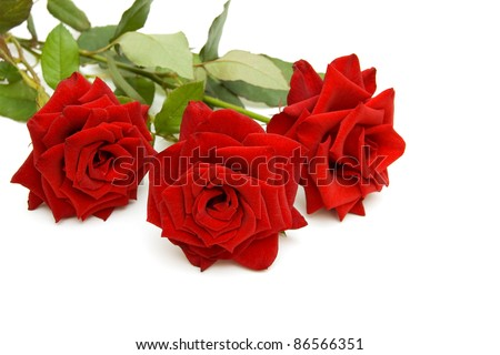 Three red roses isolated on white background - stock photo