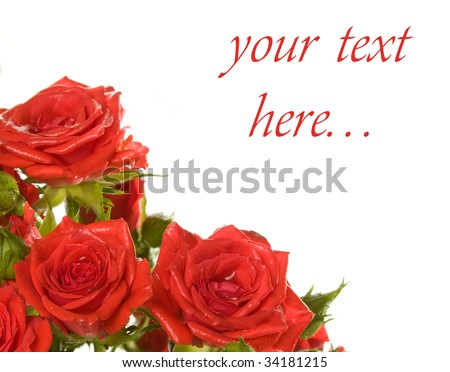 three red roses on the white background