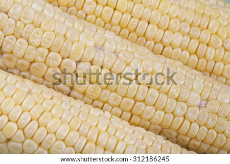 Three ripe corn on the cob without leaves  - stock photo