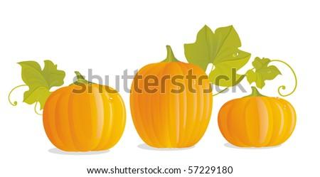 Three ripe yellow pumpkins and pumpkin leaves - stock photo