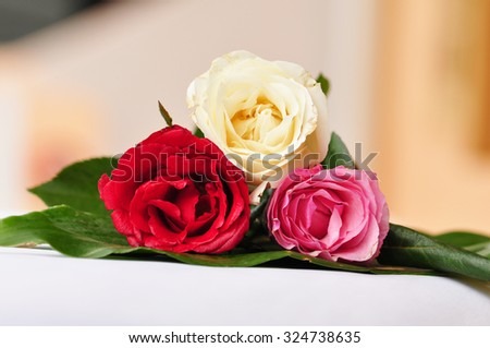 Three roses color