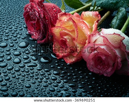 Three roses on black wet background with waterdrops - stock photo
