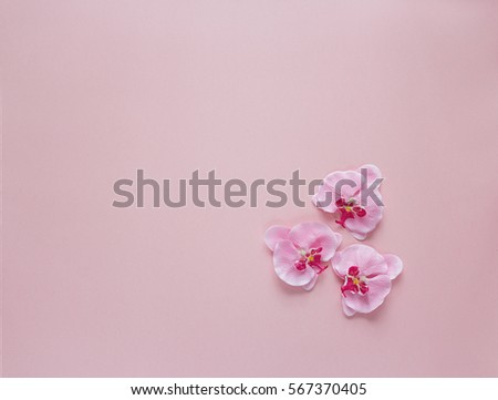 Three rosy orchid flowers on pink background. Place for text. Top view.