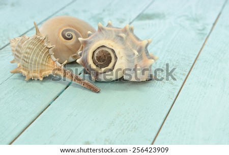 Three sea shells on a surface of weathered planks painted aqua - stock photo