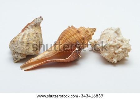 Three seashells on a white background. - stock photo