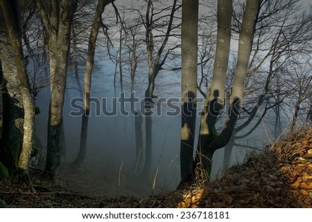 three shadow on the one tree in the foggy forest - stock photo
