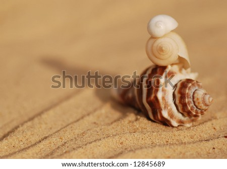 three shells stacked in the sand - stock photo