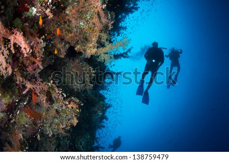 Three silhouettes of Scuba Divers swimming next to live coral reef full of fish, soft and hard coral in National Park of Egypt. - stock photo