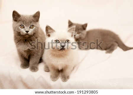 Three sitting kittens on pink background  - stock photo