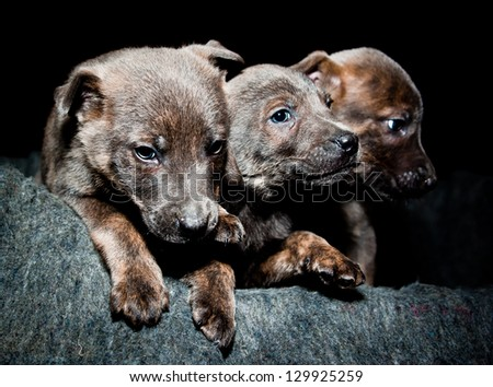 Three small, cute and orphan dog in a shelter. - stock photo