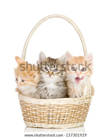 three small kittens in a basket. isolated on white background - stock photo